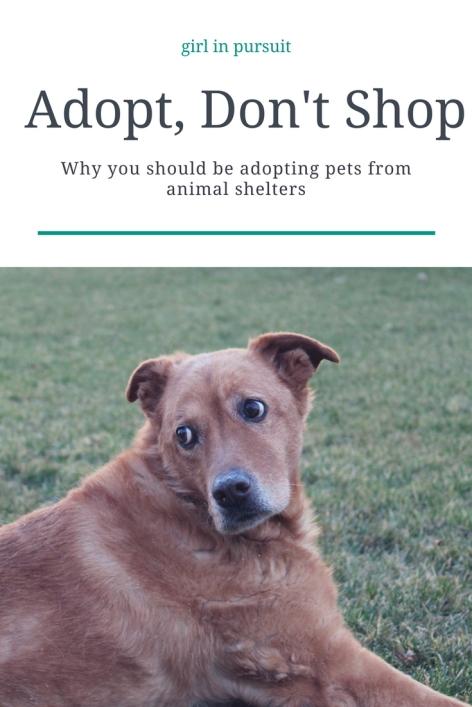 Adopt, Don't Shop