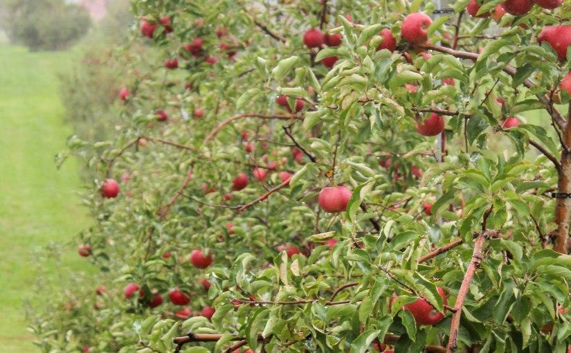 Apple of MyEye