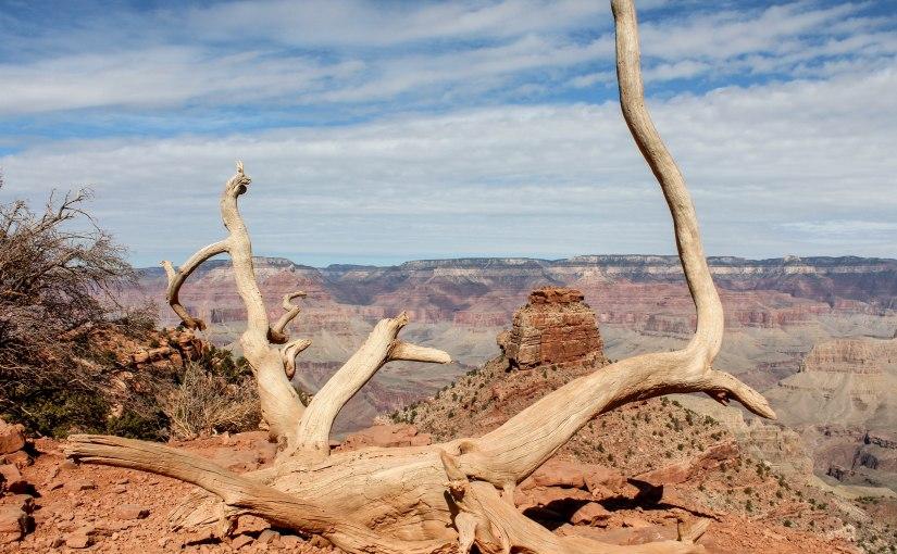 Arizona Photo RoundUp